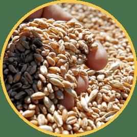 recogida-cereales