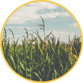 servicios-agricultor