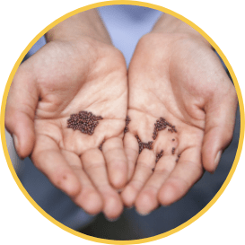 venta-semillas